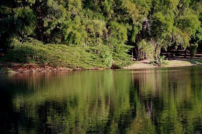 Margem do lago do Parque Areião em Goiânia. Na mata preservada pode-se encontrar pequenos animais silvestres vivendo em plena liberdade. Macacos prego.
