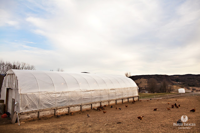 hoop_house_barnyard_chicken_coops_farm_photography_new_york by sarah parisi for this beautiful life
