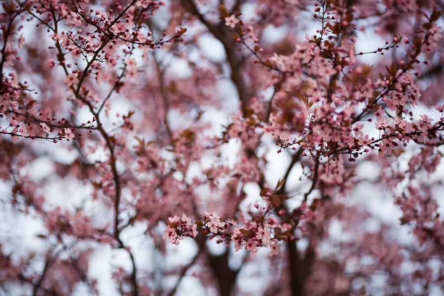 drzewo kwiaty