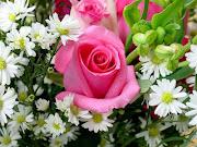 Fiori (fiori )