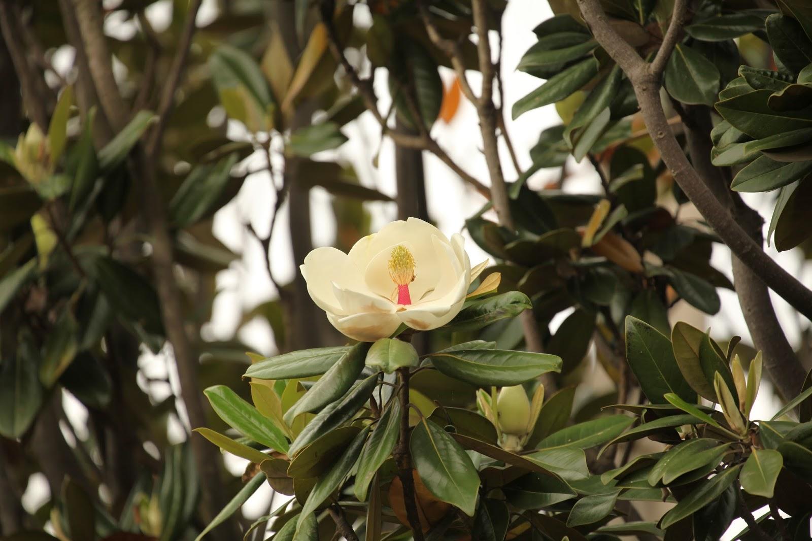 木蘭の画像 p1_10