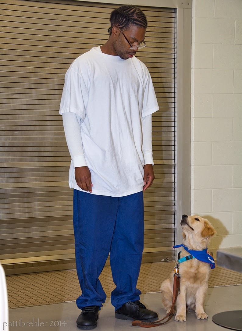 An african american man wearing blue prison pants and a white long sleeve and glasses is standing facing the camera with a small golden retriever puppy sitting on his left side. The man is looking down at the puppy and the puppy is looking up at him. The man's hands are hanging down at his sides. The puppy's leash is lying on the tile floor attached to his collar. The puppy is wearing the blue Future Leader Dog bandana.