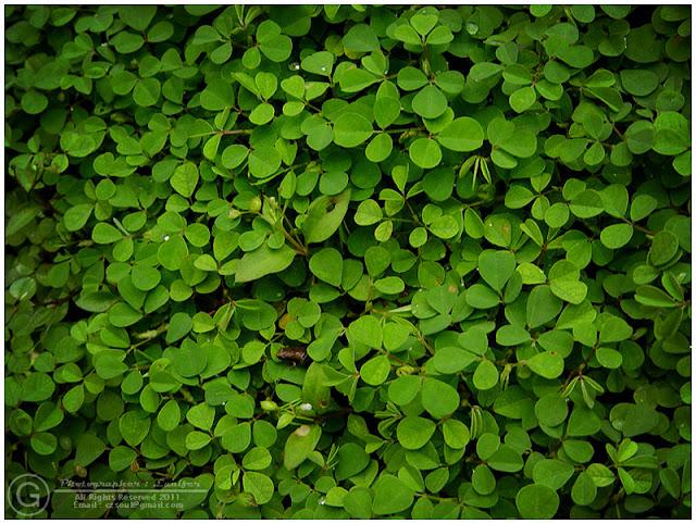 Photograph Leaf