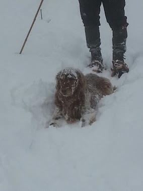 Tilley enjoying the snow
