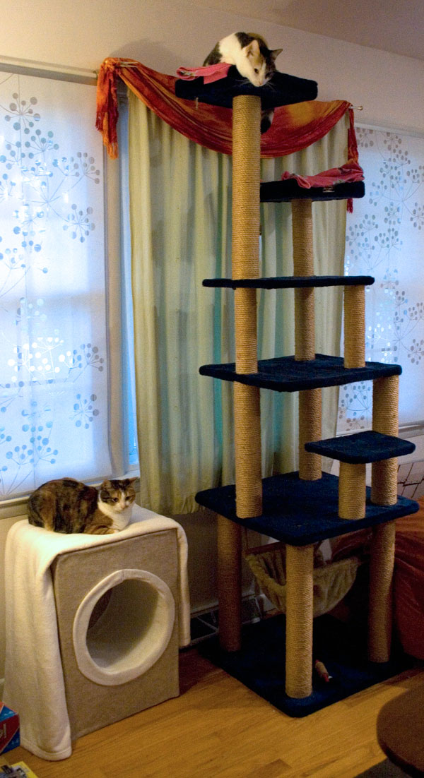 This is it a diy cardboard cat condo march 10 2012 for Diy cat tower cardboard