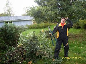 Talonmies pihapuiden kaataja pensaikkojen leikkaaja e-mail: talonmiespalvelu@gmail.com