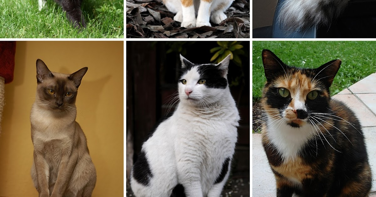 Anime Menurut Penelitian Terbaru Kucing Tergolong