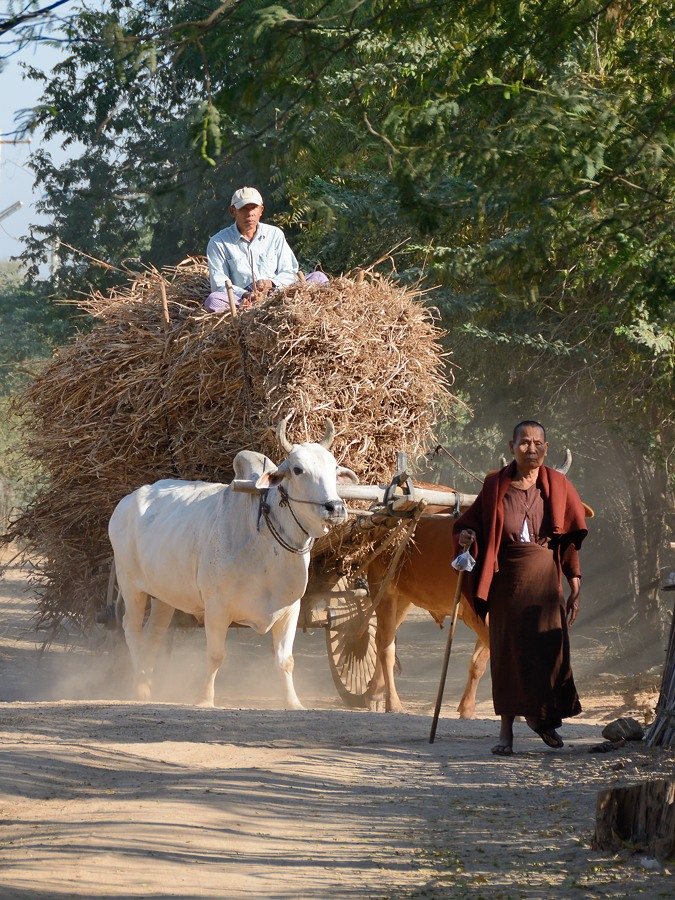 Ox cart and monk in Min Nan Thu village at Nyaung U near Bagan, Myanmar