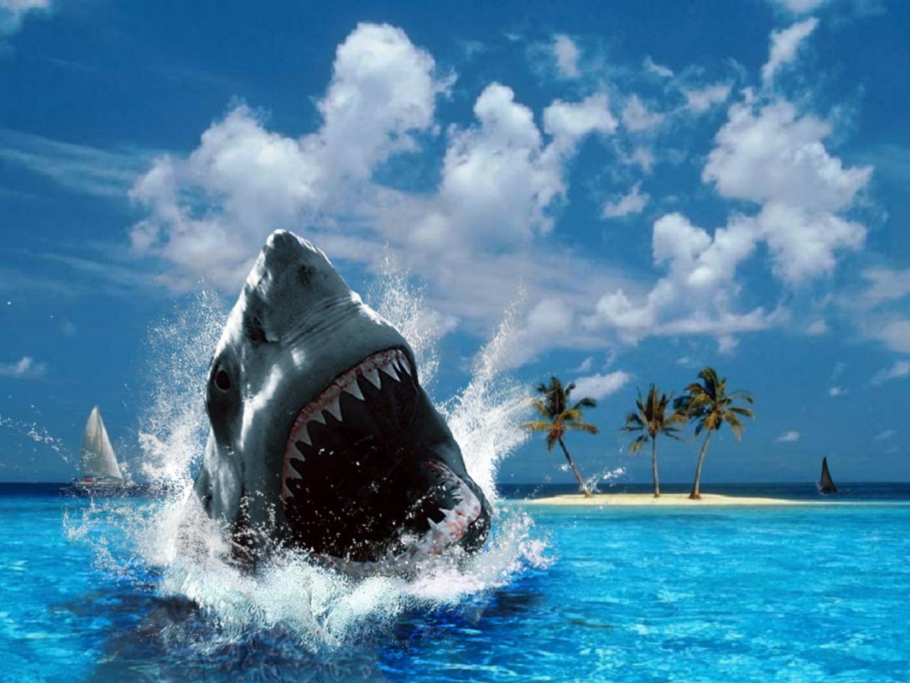 Great White Shark Australia For Desktop - great white shark australia wallpapers