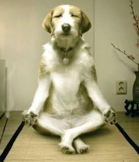 Inner Peace  Meditating+dog