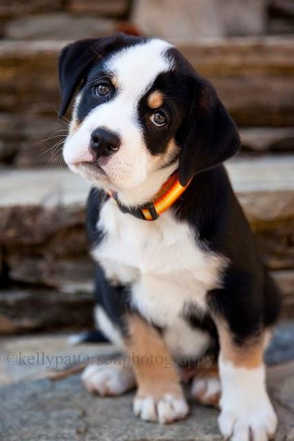 See more puppies http://cutepuppyanddog.blogspot.com/