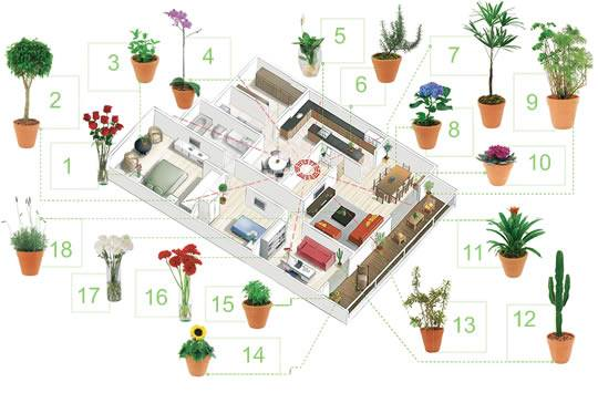 O cultivo a vida feng shui harmonia em sua casa com as for Plantas entrada casa segun feng shui