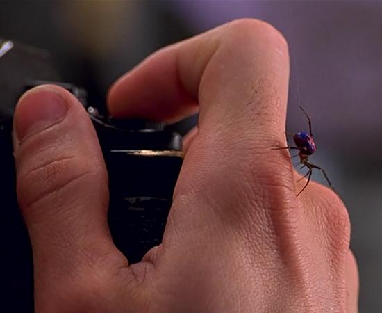 Aranha do homem aranha