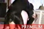 Zoofilia com Esposa Dando pro Cachorro de Quatro