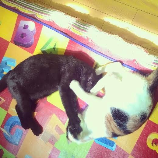 foto HIkari dan Ai sedang tidur bareng
