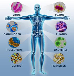 Keseimbangan ( Imunitas ) Tubuh