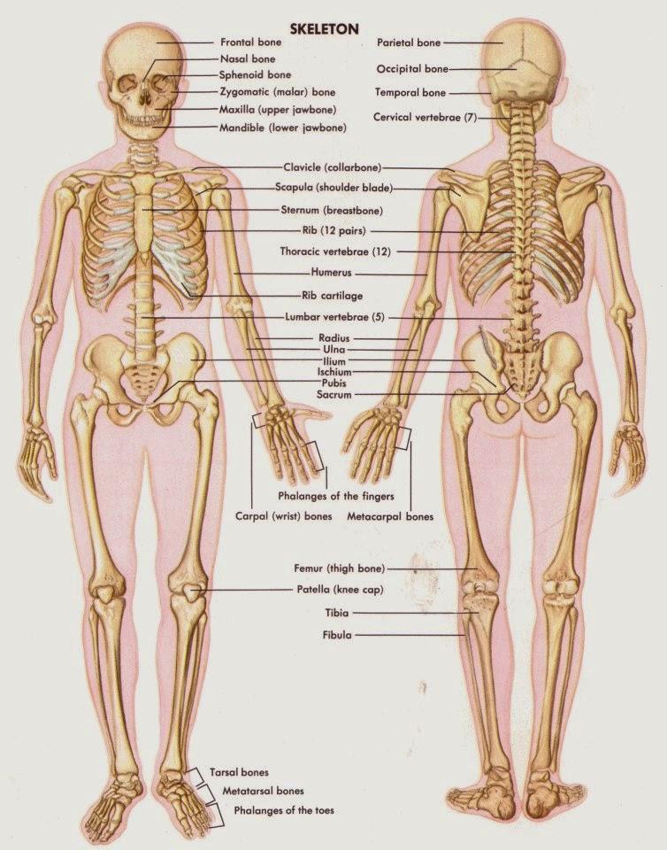 askep sistem muskuloskeletal