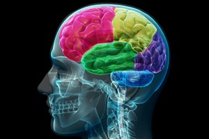 Manfaat terong yang dapat menjaga kesehatan otak