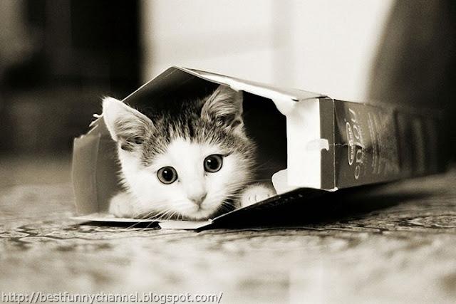 Kitten in a box.