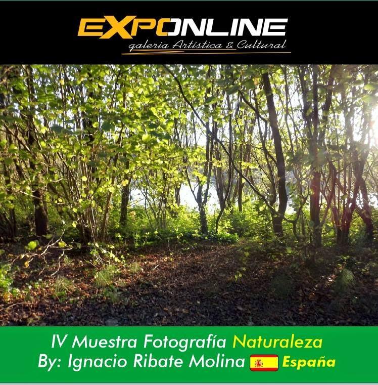 EXPONLINE 2