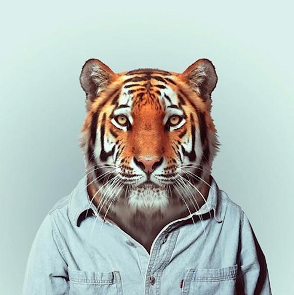 Modelos animais – Bem Legaus
