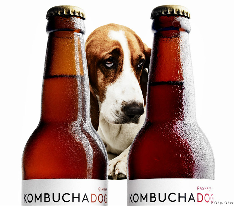 Probiotic For Dog My Pet Wearhouse