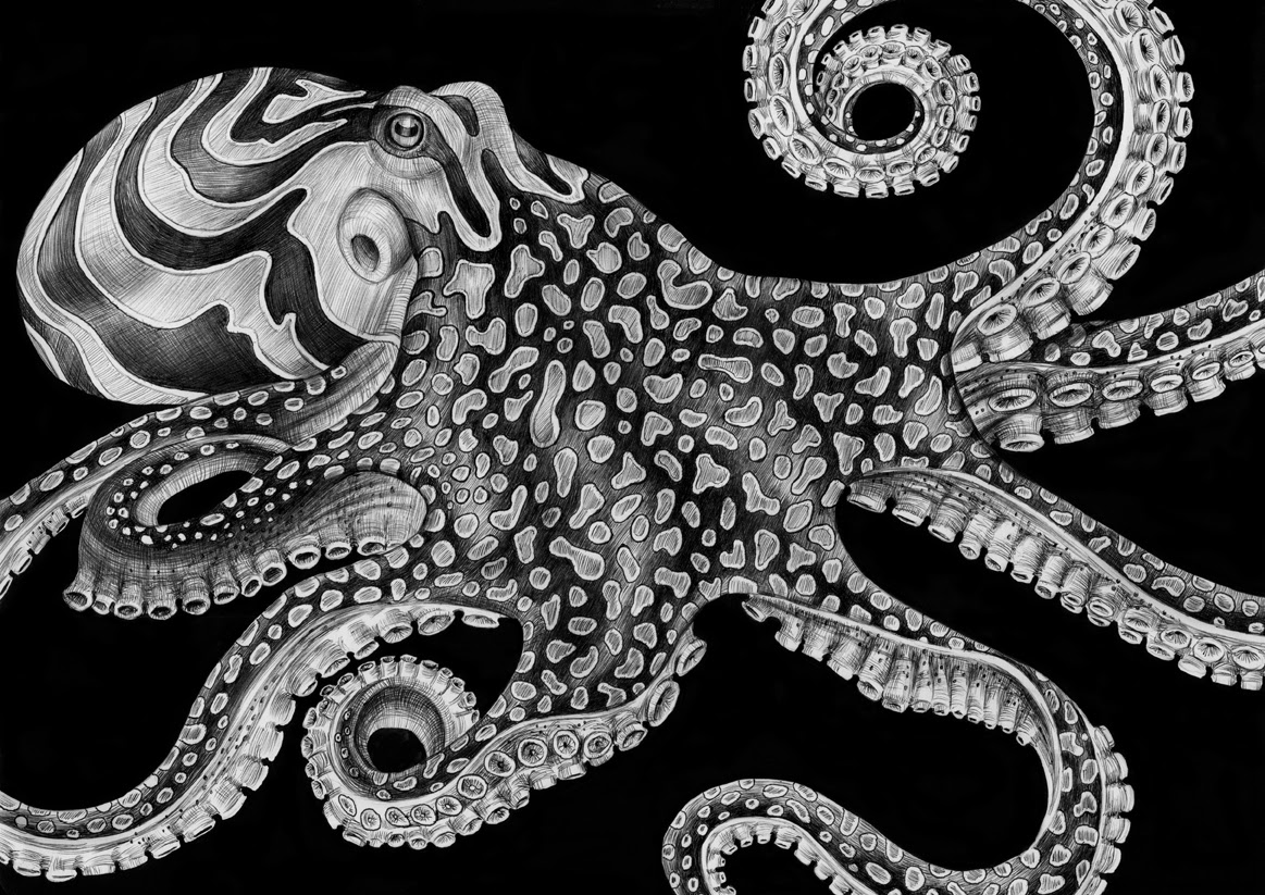 Black Octopus Drawing And White Octopus Drawing