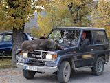 Une journée de chasse à Châtelus 2011