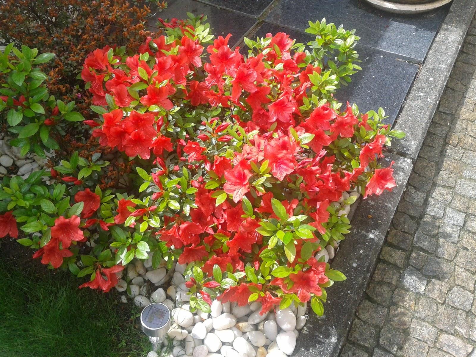 112. rosas do meu jardim tonicha:já agora apresento vos a minha sala  #AA2721 1600x1200 Banheiro Com Jardim Pequeno