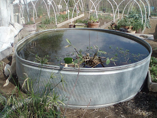 The redneck hippie easy water gardening for Fish pond tanks for sale