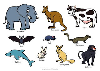 types of mammals,list of mammals