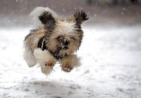 Photos of Dogs in Snow