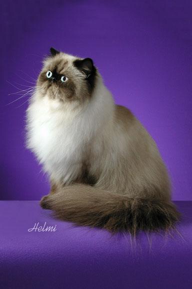 Adketo Ejayelle Jom Kenal Baka Kucing