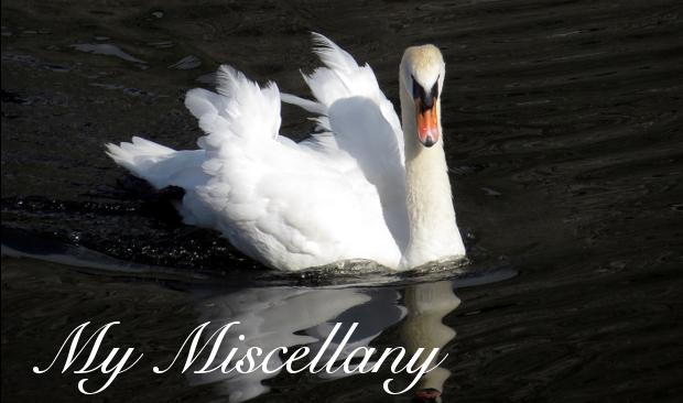 My Miscellany