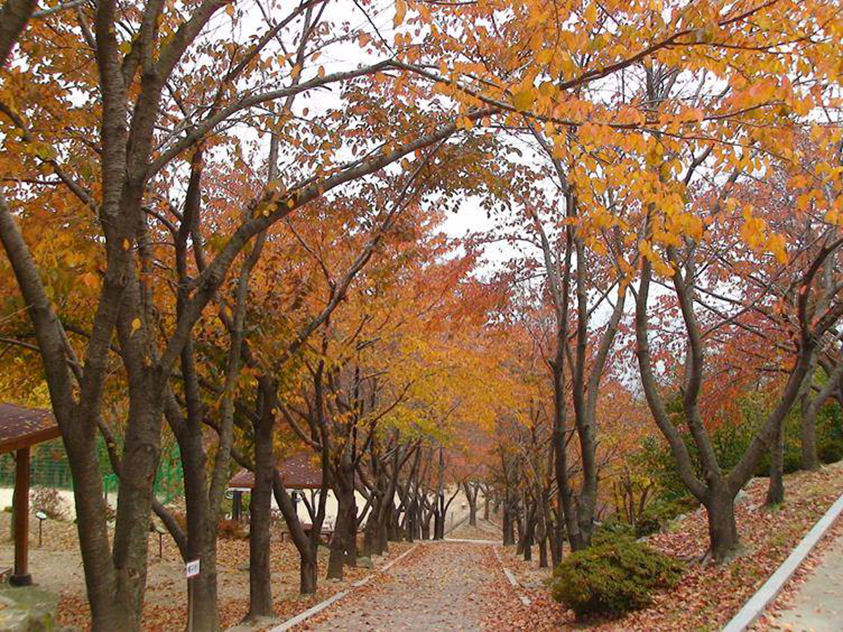 A street along the foliage