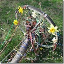 Maypole daffodil crown