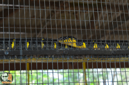 Taman Ular Perlis - Snake Farm