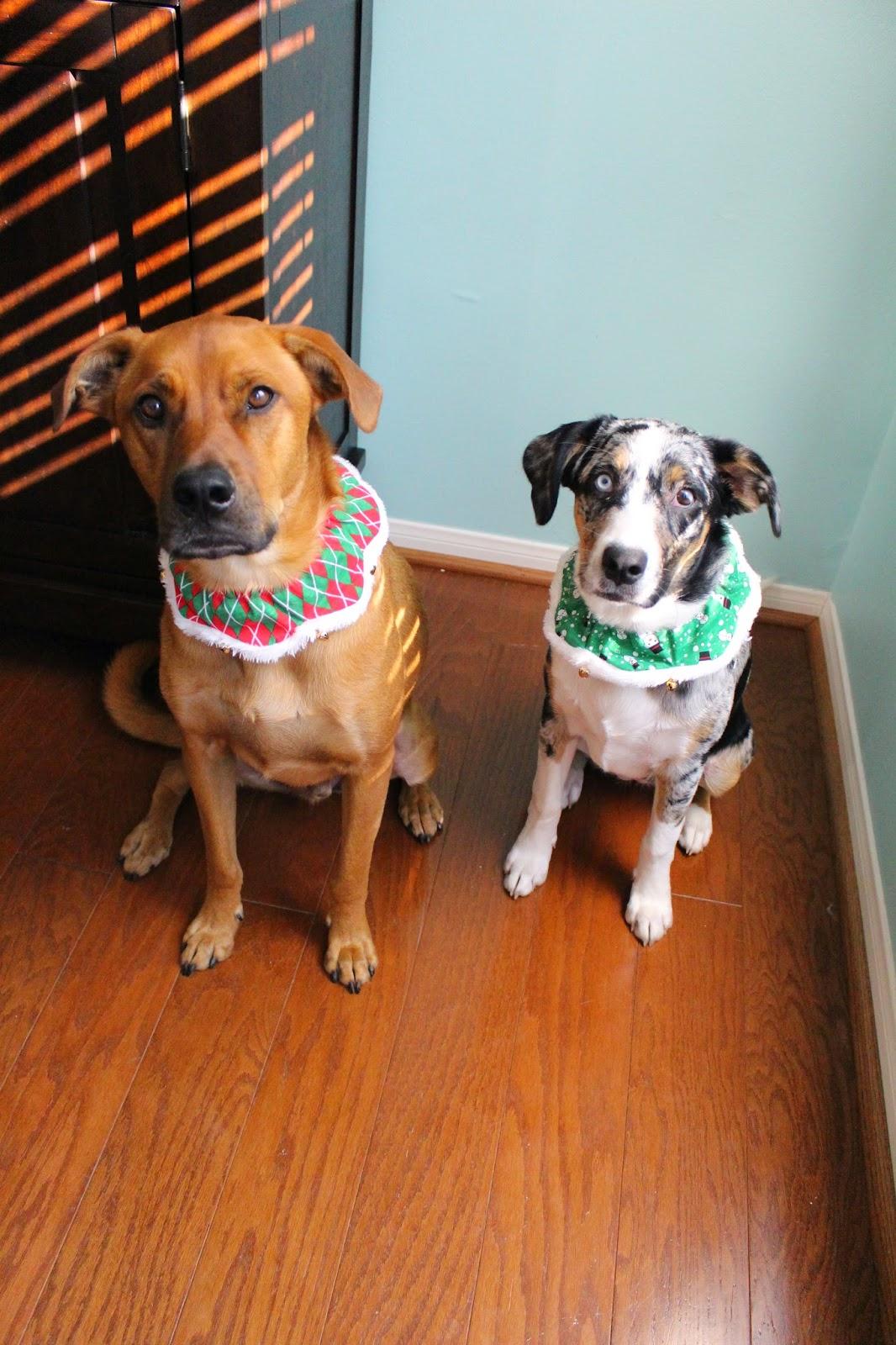 Christmas Dog Collars