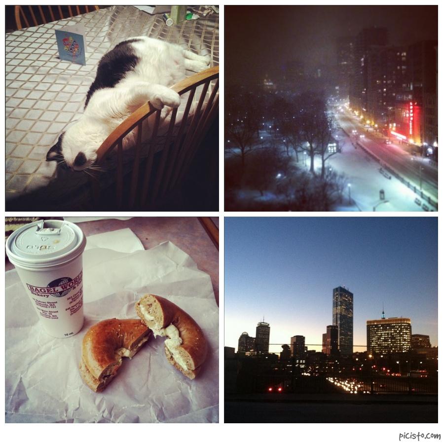 cat Boston bagel