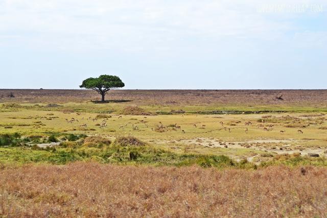 luzia pimpinella | travel tansania | safari in der serengeti - savanne