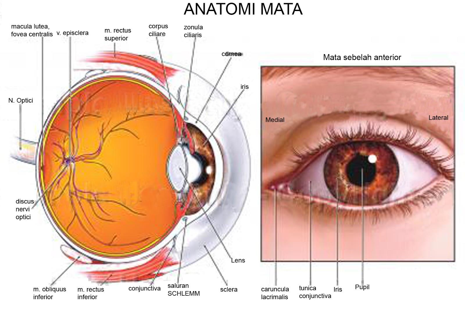 Image result for jenis penyakit mata dan pengobatannya