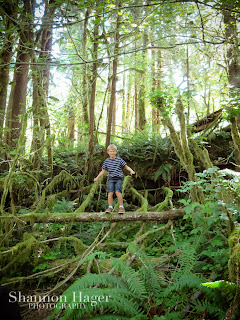 Shannon Hager Photography, Lake Quinault Forest