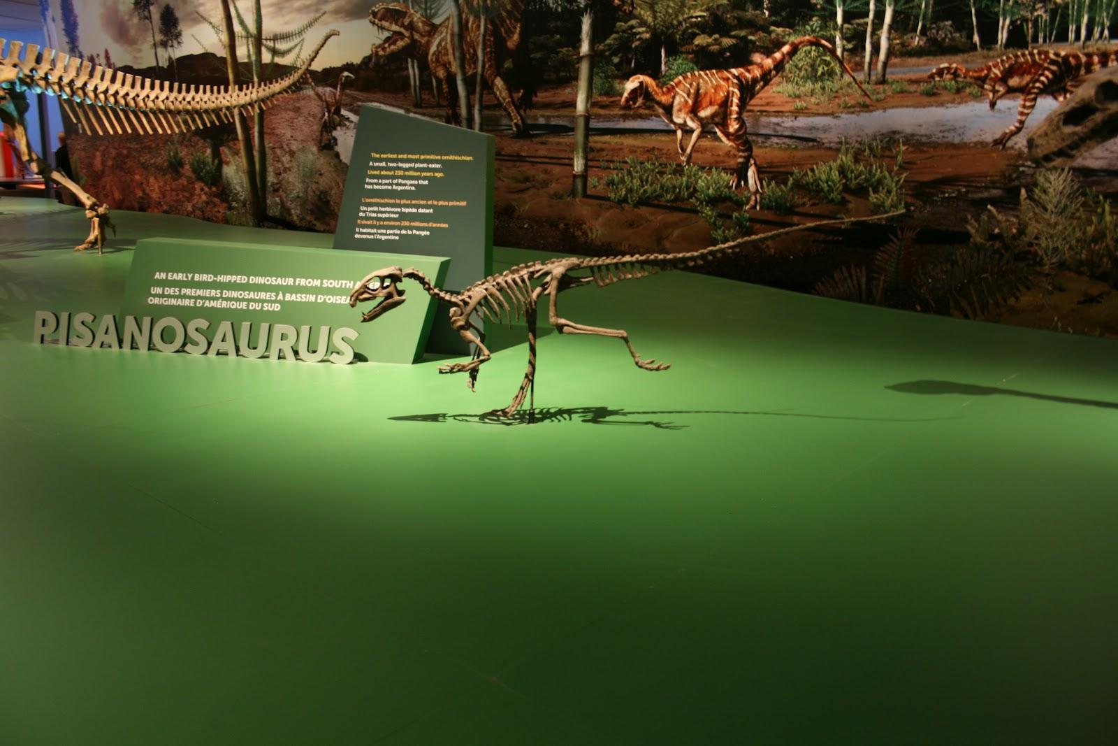 dinosaurus bassin
