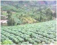 Kerjasama Indonesia Green Loka