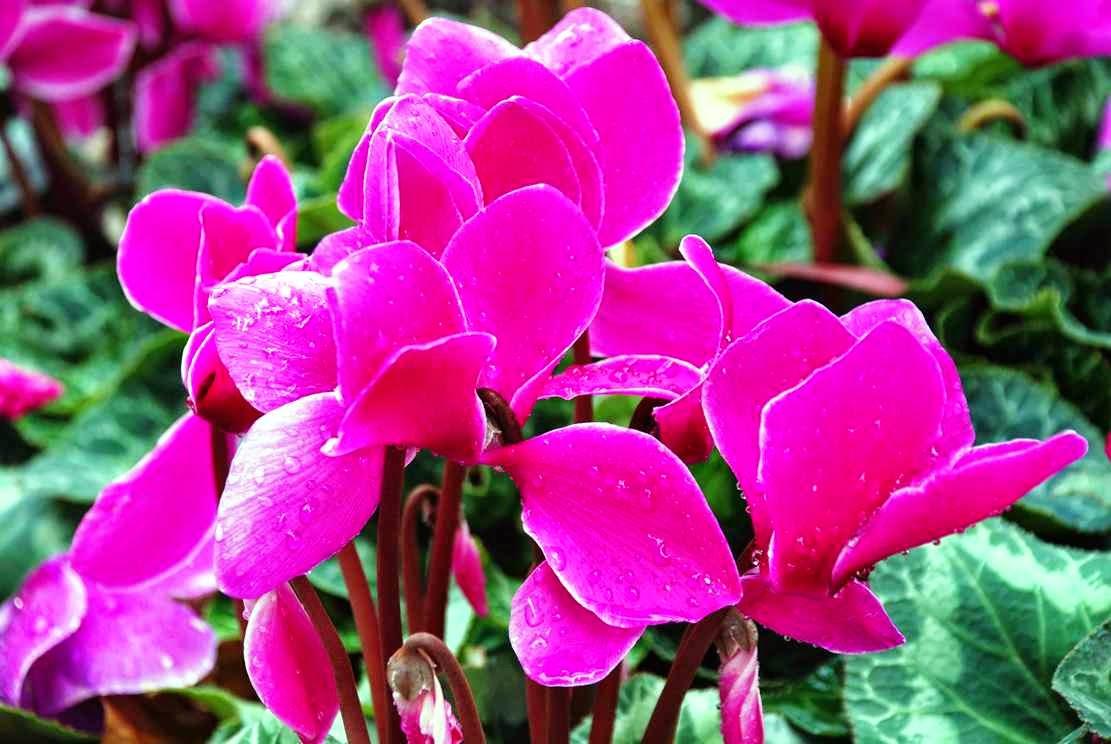 Фото роз с поздравлением