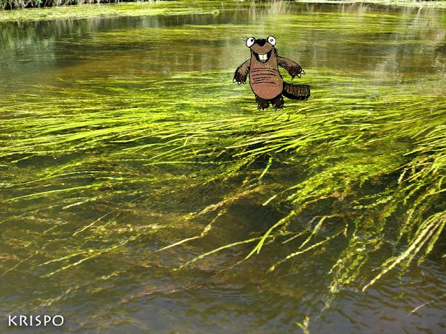 plantas sumergidas en el lago leon