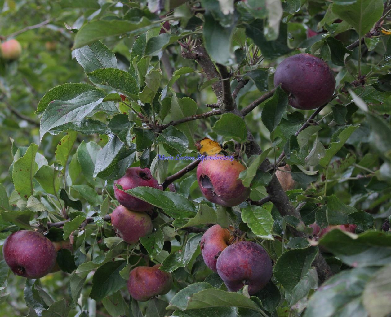 Mi mirada arboles frutales for Arboles frutales