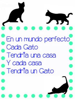 Spanish Cat Quote