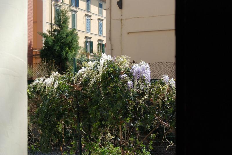 gilcine in fiore