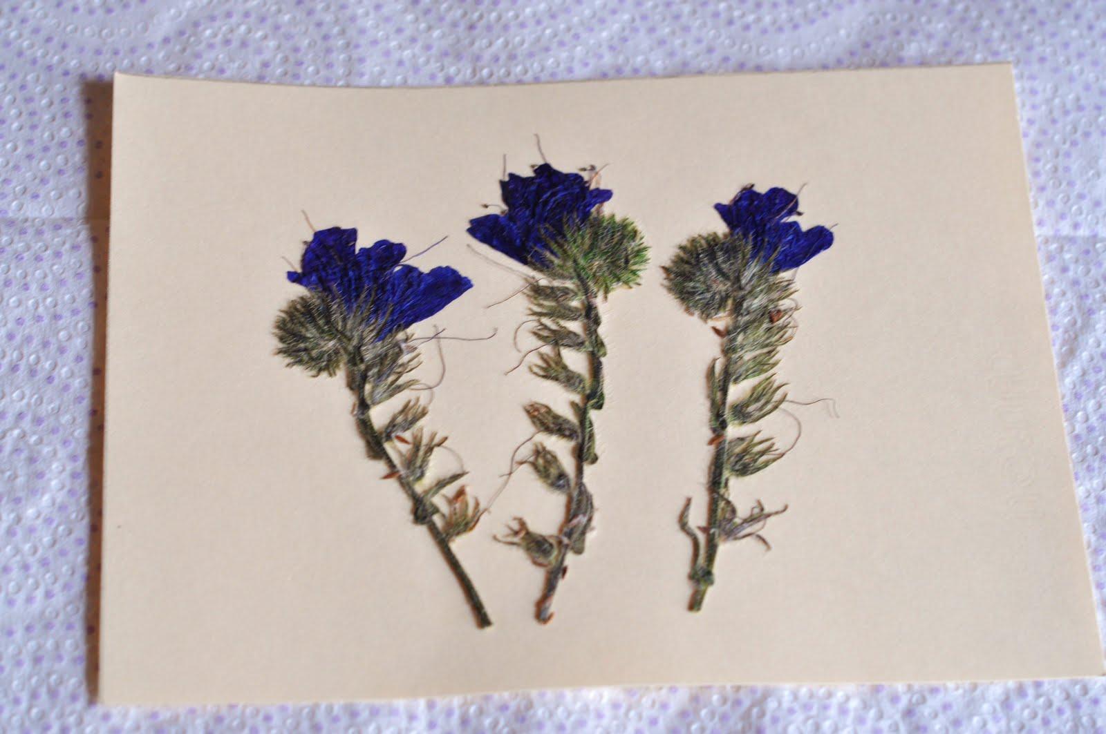 Mam s todoterreno tarjeta con flores secas y prensadas - Decoracion con flores secas ...